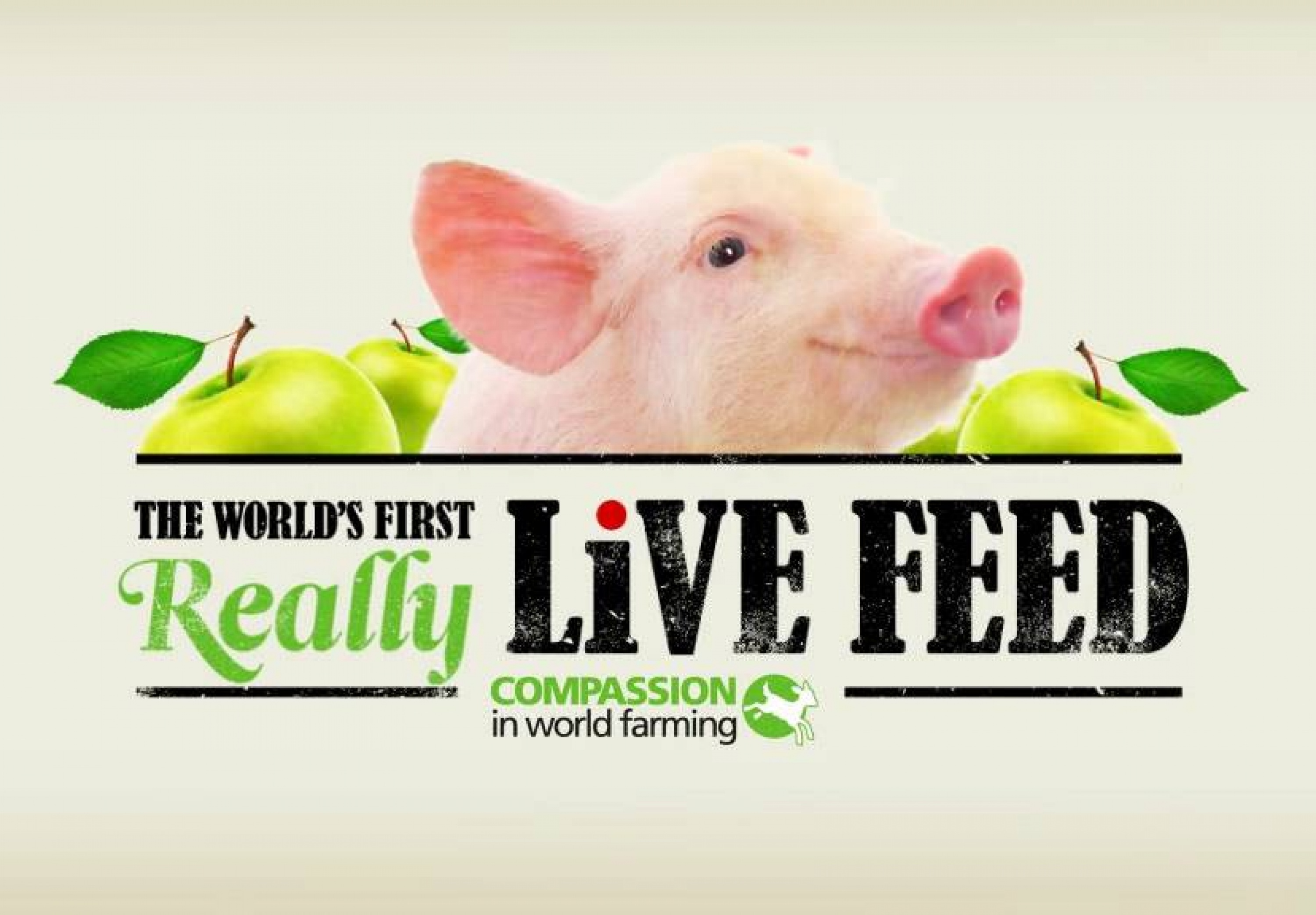 World S First Real Live Pig Feed Benefits Animal Welfare